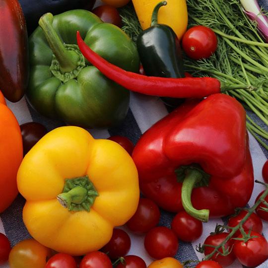 05新鲜蔬菜
