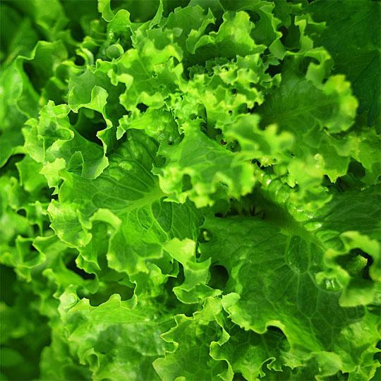 0403蔬菜